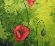 Poppies ©2012